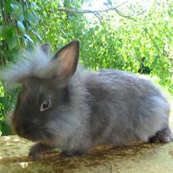 james brown wabbit
