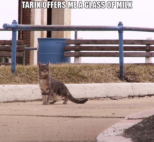 tarik offers me a glass of milk