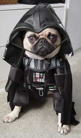 darth vader dog dressup contest