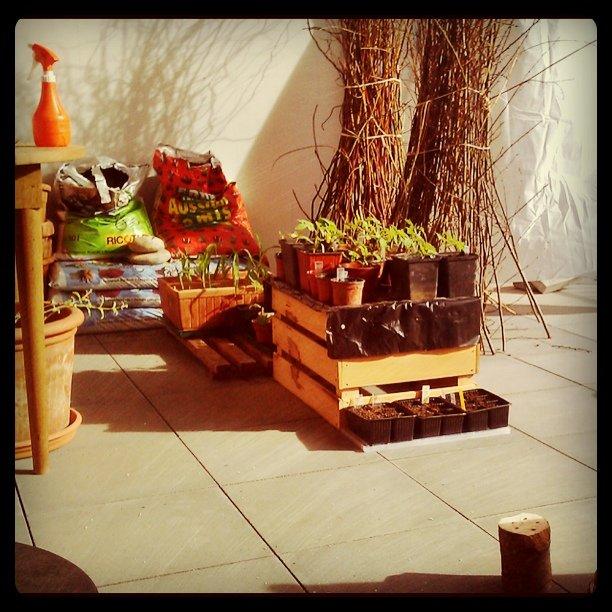 tomatoes sunbathing