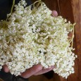 'tis the season! or well, it's almost over. elder trees are blooming and this means it's time to make my favorite drink. ever! nothing!!! compares. here's how to make it: […]