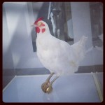 chicken on egg