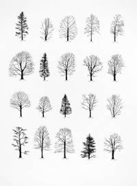 Katie Holden - Trees
