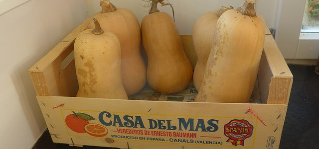 Ahh, ze mighty Butternut. So easy to grow, and so much fun to grow as well. The chaotic, anarchic plants, one of the truly unruly ones, will be taking over […]